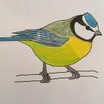 Tegninger af havens fugle