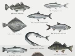 Lær at kende 25 fisk