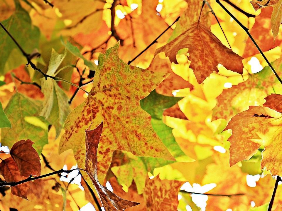 Det er efterår