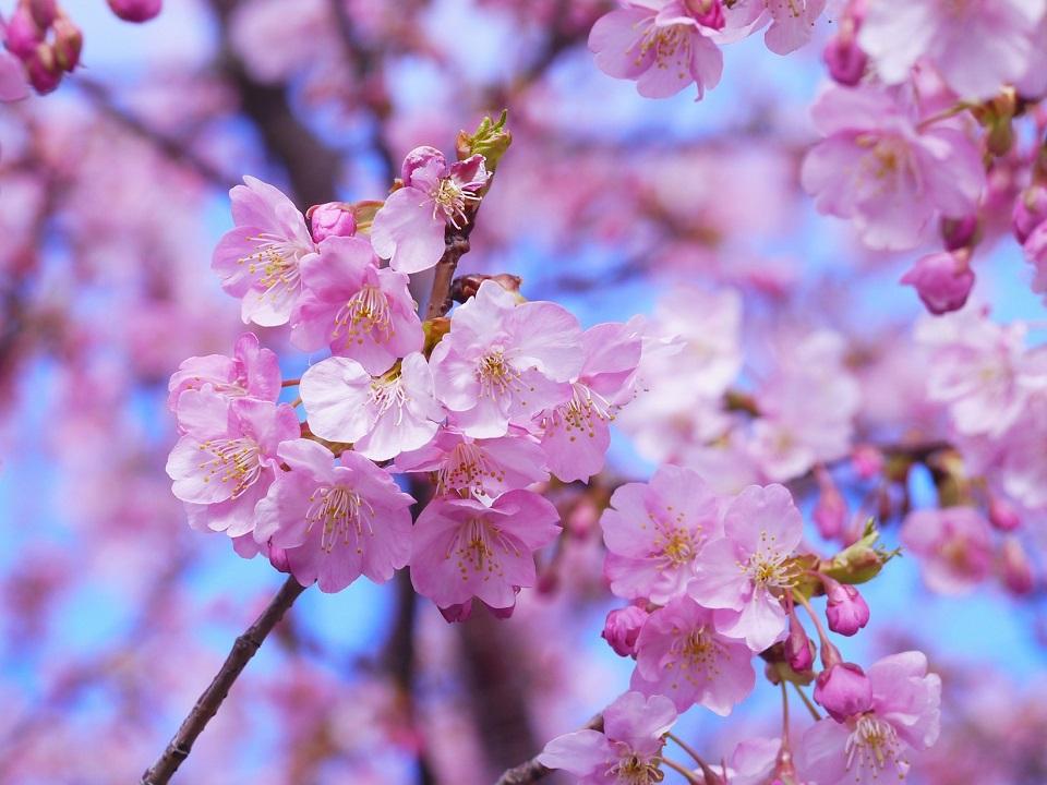 Hvad mon en blomstringsudsigt er?